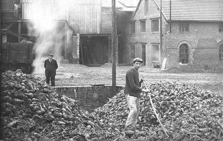 Campagne 1927 / 1928 - Ouvrier dans la fosse à betteraves.